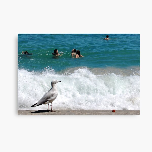 A Seagulls Point of View Canvas Print