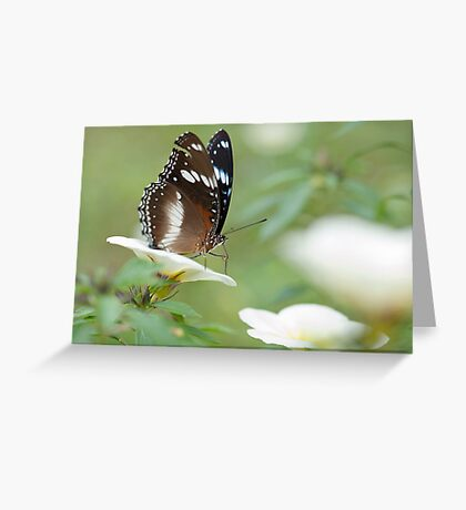 The Poser - common crow butterfly Greeting Card