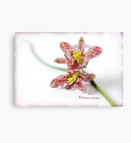 Fritillaria meleagris Canvas Print