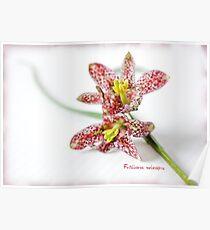 Fritillaria meleagris Poster
