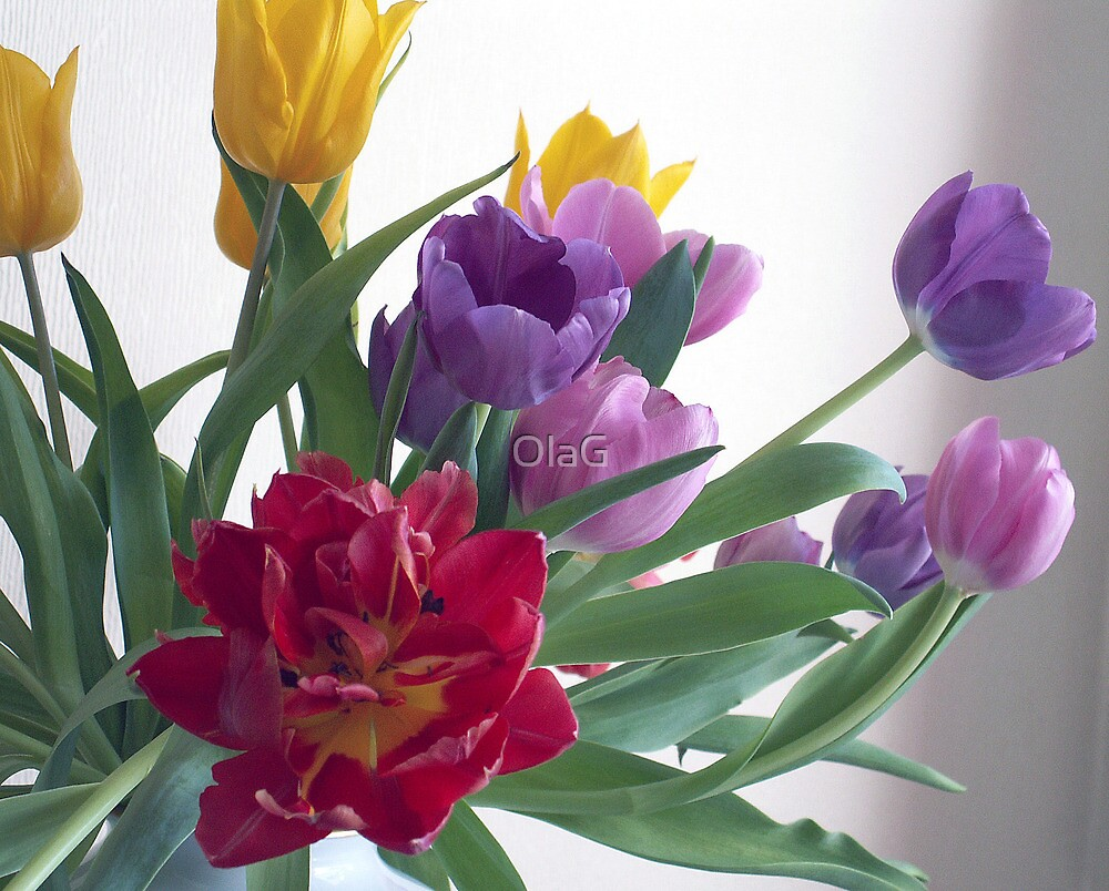 That Red Tulip by OlaG