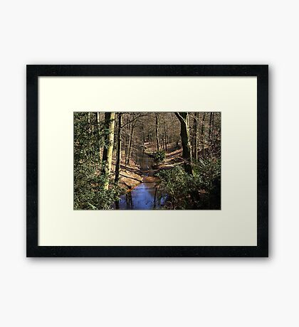 Spring Stream in the Forest Framed Print