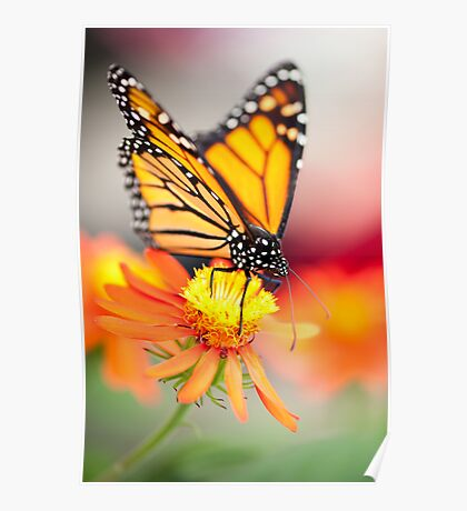 Butterfly 13 Poster