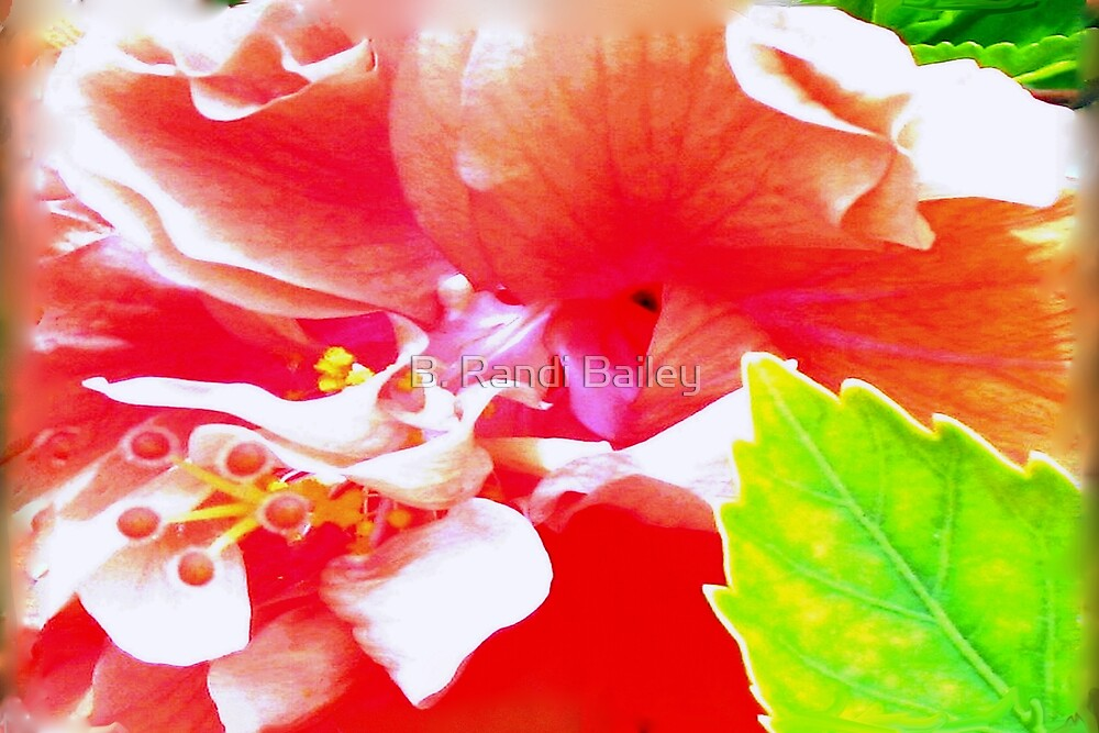 Inside story of a hibiscus by ♥⊱ B. Randi Bailey