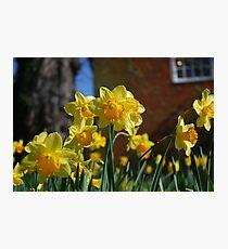 Farnham in Springtime No2 Photographic Print