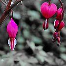 Bleeding Hearts In The Pink by Karen Kaleta