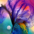 Dancing Iris by Rikki Woods