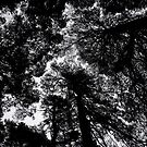 Lurking trees by contradirony