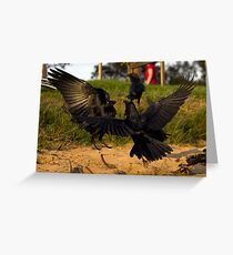 Crow fight at Long reef Greeting Card