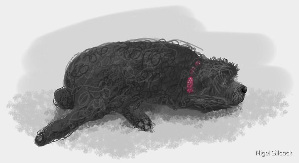 Tibetan Terrier by Nigel Silcock