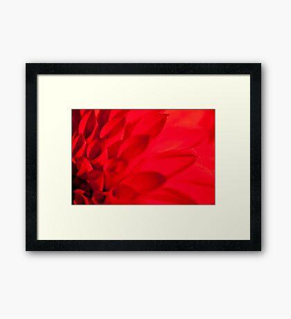 Darling Dahlia Framed Print