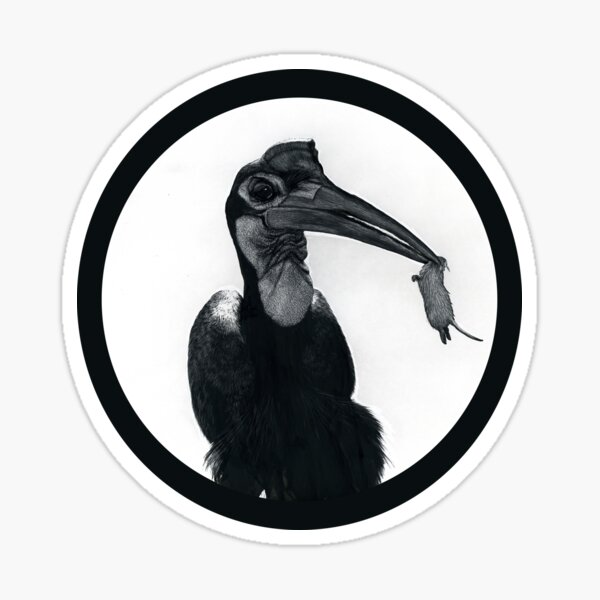 Abyssinian ground hornbill with snack Sticker