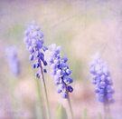 Purple April by aMOONy