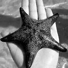 Starfish.  by Of Land & Ocean - Samantha Goode