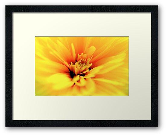 Sunflower by jansant