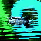 Duck by Tube