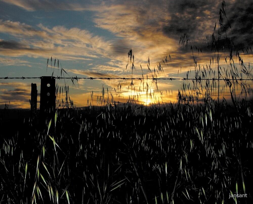 Farm Fence sunset by jansant