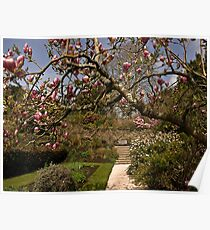 Spring Blossoms at Cotehele Poster
