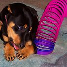 Lola and her slinky ... by elwyn crawford