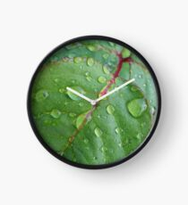 After the rain Clock