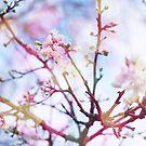 Bokeh Blossom #2 by babibell