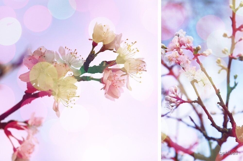 Blossom #3   Diptych by babibell