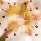 Bokeh | Pink | #2 by babibell