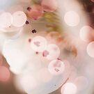 Bokeh | Pink | #3 by babibell
