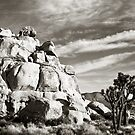 Joshua Tree National Park at Sunset by Nickolay Stanev