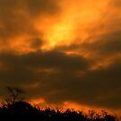 Sunrise in Louisiana by BShirey