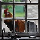 There's a Rooster on my Windowsill by Alfred Hellstern