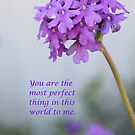 You Are Perfect by DebbieCHayes