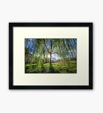 Weep Willow, Weep Framed Print