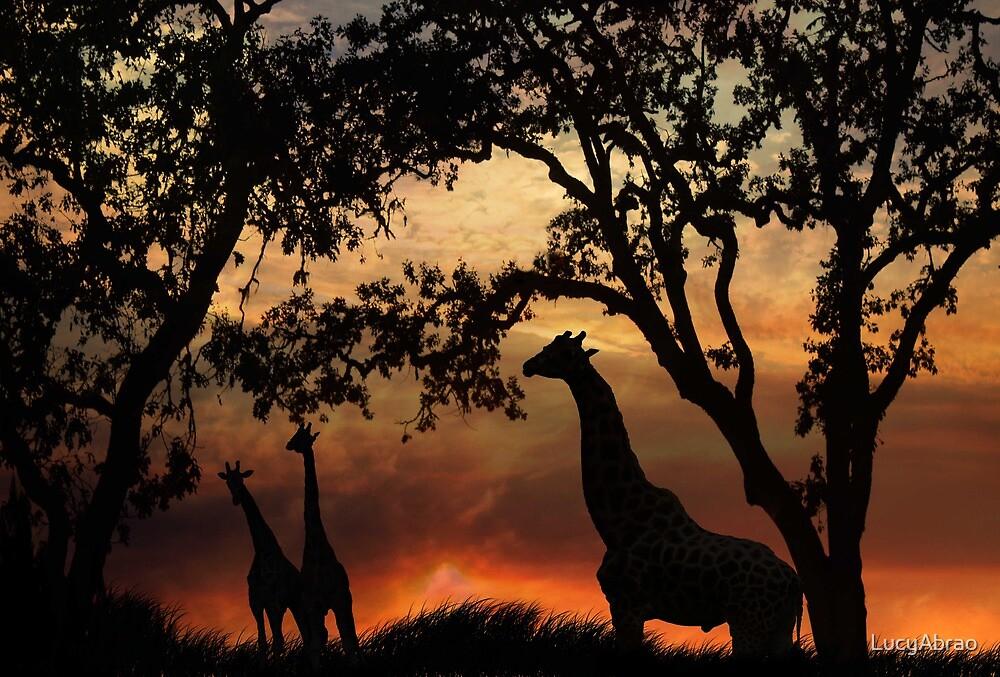 Giraffe Sunset by LucyAbrao
