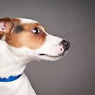 Jack Russell profile by natalies