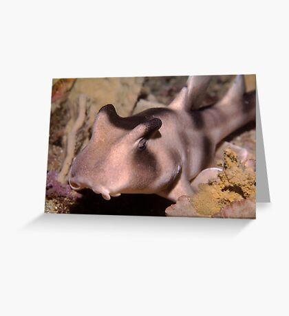 Crested Hornshark outside Sydney Harbour Greeting Card