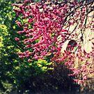 Spring's Arrival by Jennifer Rhoades