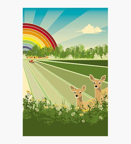 baby deer Photographic Print