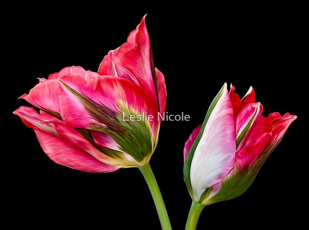 Tu-Tulips by Leslie Nicole