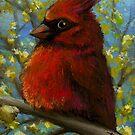 Cardinal by tanyabond