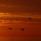 Duck sunrise by Al Williscroft