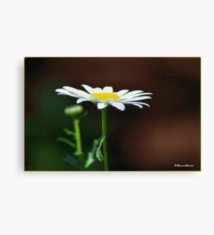 SIMPLICITY - EENVOUD Canvas Print