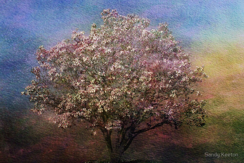 Magnolia Tree in Bloom by Sandy Keeton