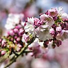 Sunny pink blossoms by Guy Carpenter