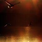 Gulls in the sun by Paul  Green