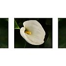 Collage Calla Lilies by Aase