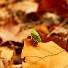 A Bug's life by Jessica Mullins-Hunter