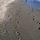 Footprints by Laurie Perry
