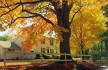 Connecticut Autumn by Alberto  DeJesus