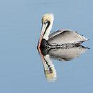 Placid Pelican Swimming in Sunlight by J Jennelle